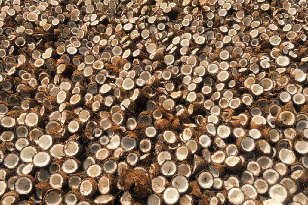 """Voda z dospelých kokosov nemá v južnej Indii priemyselné využitie. Malai však tento """"odpad"""" zachraňuje a vyrába z neho bakteriálnu celulózu. Kasturi Coconut Processing, Channapatna, India"""